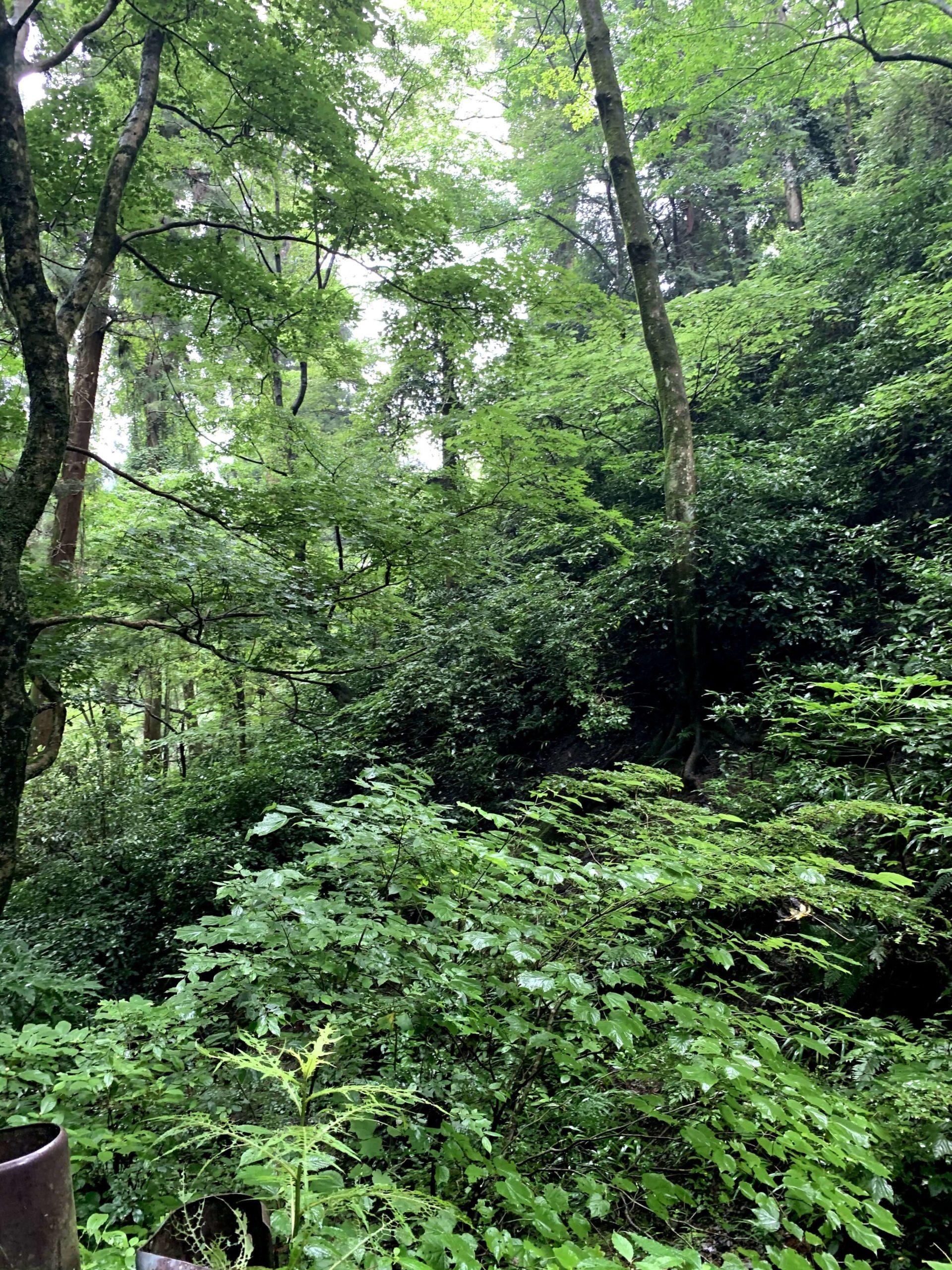 JR中央線沿いにある自然豊かな散歩コース6選