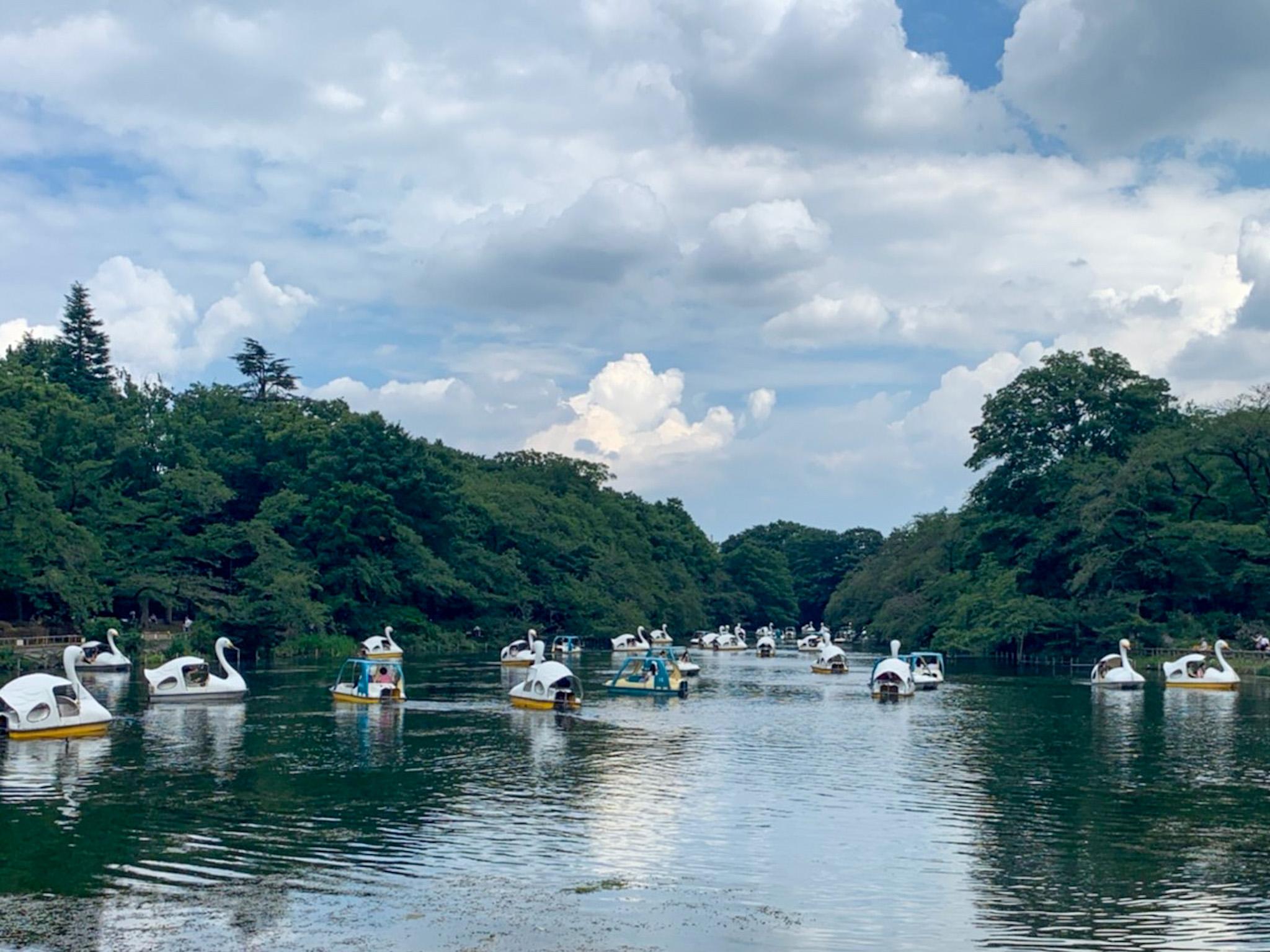 【井の頭公園】吉祥寺からアクセスできる自然豊かな散歩コースのご紹介