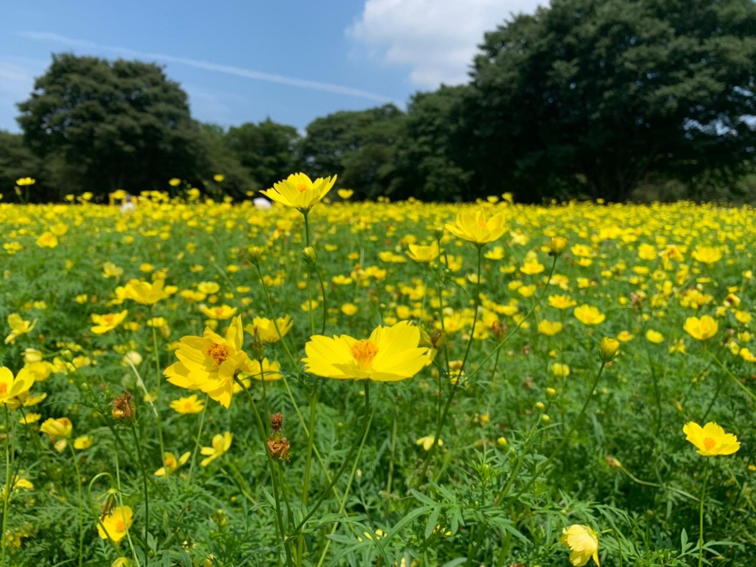 【散歩日和】夏の国営昭和記念公園での散歩おすすめポイントをご紹介!